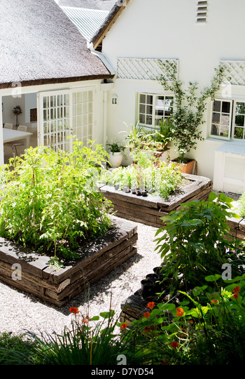 Planters in modern backyard - Stock Image