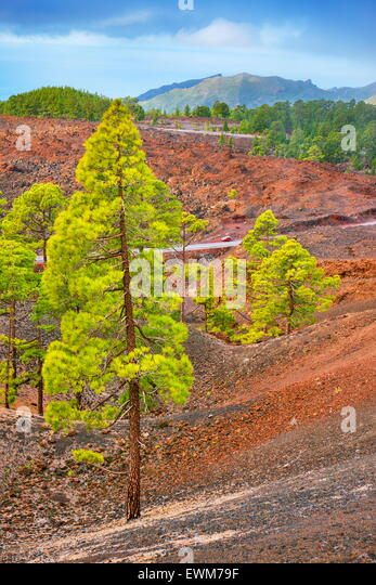 Volcanic landscape, Teide National Park, Tenerife, Canary Islands, Spain - Stock-Bilder