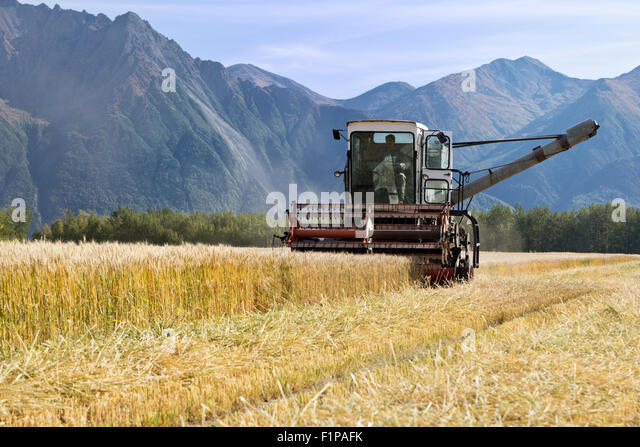 Gleaner E Combine : Allis chalmers stock photos images