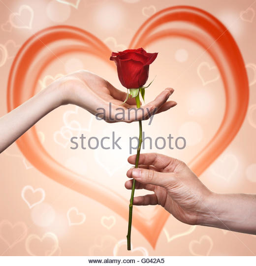 man's hand giving a rose to a woman who carefuly takes it - Stock Image