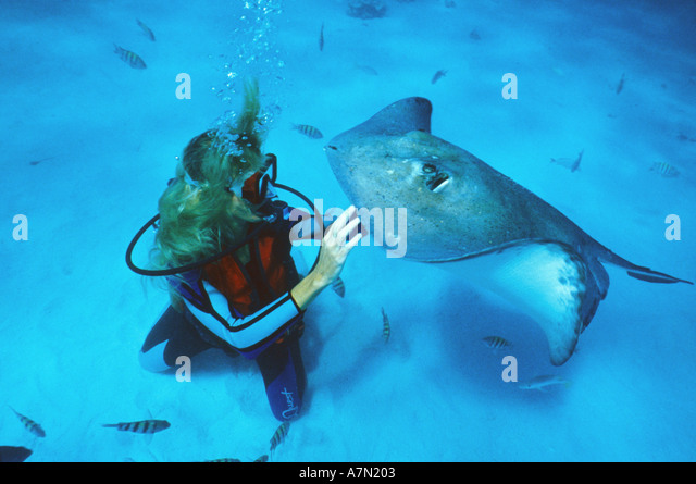 Grand Cayman diver petting stingray at Stingray City - Stock Image