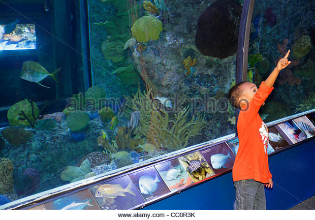 Aquarium new orleans louisiana coupons