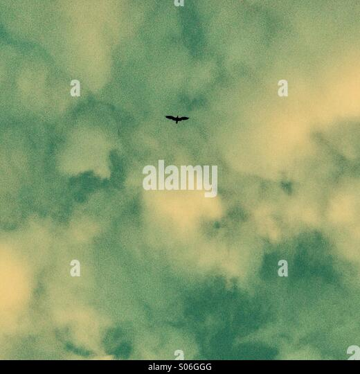 Flying bird - Stock Image
