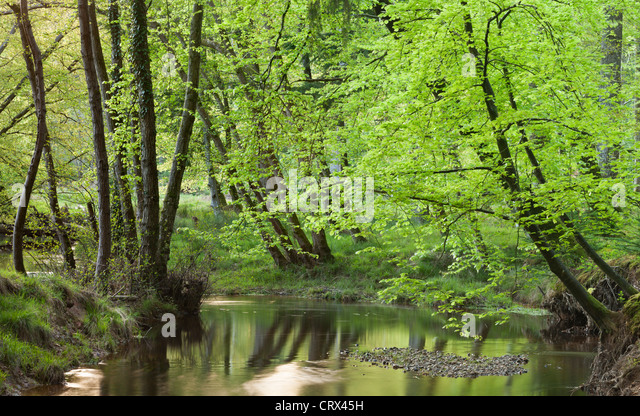 Blackwater river in the New Forest, Hampshire, England. Spring (May) 2012. - Stock Image