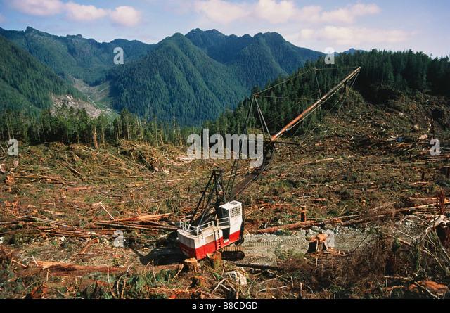 Deforestation of Temperate Rainforest - Stock Image