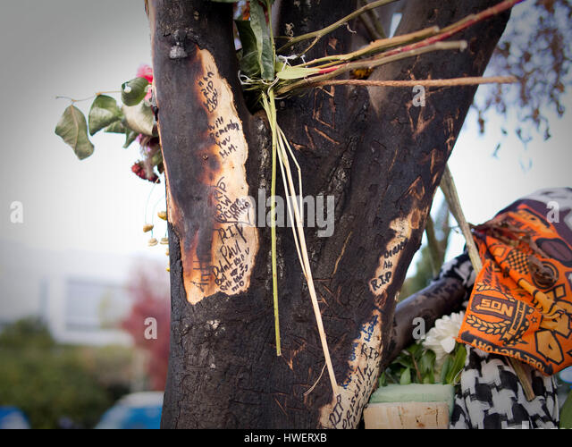The charred tree at the make shift memorial for actor Paul Walker, star of the 'Fast and The Furious', on - Stock Image