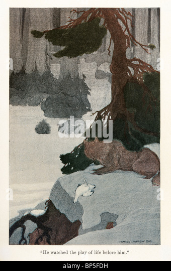 Illustration from White Fang by Jack London, 1905, 1906; illustrated by Charles Livingston Bull. - Stock Image