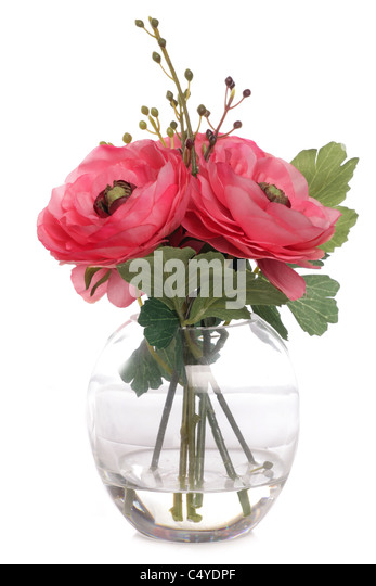 roses in a vase studio cutout - Stock Image