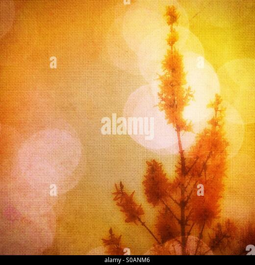 Yellow flower in the sunshine - Stock Image