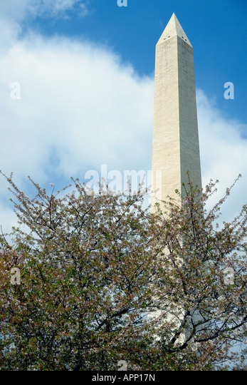 Cherry Blossoms and The Washington Monument  in Washington DC USA - Stock Image