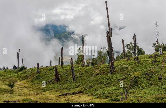 Disease and deforestation along the mountain slopes near Dirang, Arunachal Pradesh, India. - Stock Image