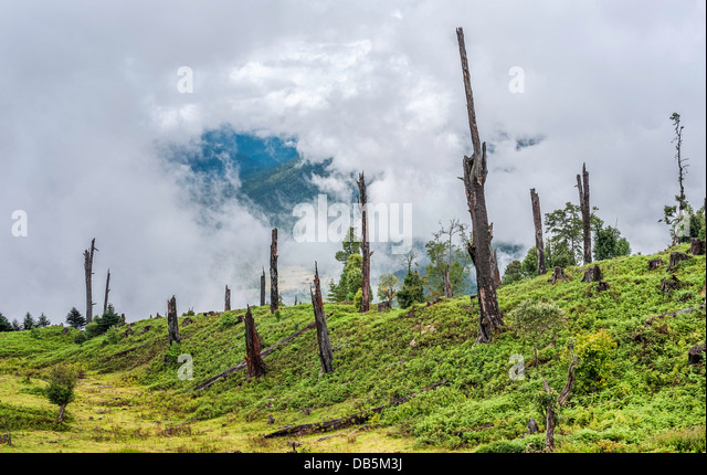 Dead and decaying trees from disease and illegal logging, deforestation, in the mountains of western Arunachal Pradesh. - Stock Image