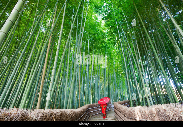 Woman walking in a bamboo forest, Adashino-nenbutsu-ji Temple, Arashiyama, Kyoto Prefecture, Kinki Region, Honshu, - Stock Image