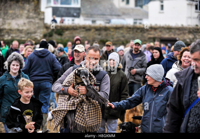 North Beach; Newquay, Cornwall. 12th November, 2016. Hundreds of dog lovers and their pets turn out to celebrate - Stock Image
