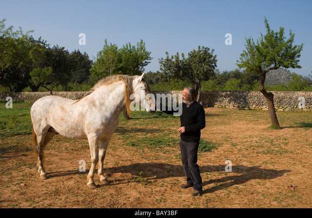 Pepe with Spanish Horse, Agrotourismo Alfatx Finca Hotel, near s'Esgleieta, Mallorca, Balearic Islands, Spain - Stock Image