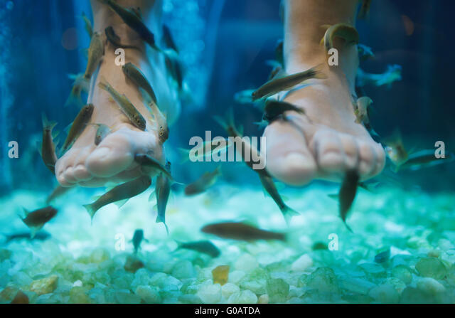 Fish pedicure stock photos fish pedicure stock images for Fish eating dead skin spa