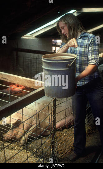 teenager in a barn feeding sow and piglet - Stock Image