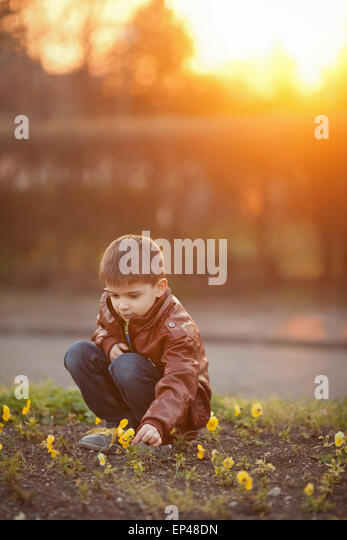 Boy picking flowers at sunset - Stock Image