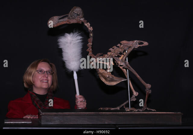 Summers Place Auctions, Billingshurst, UK. 17th November, 2016. The Summers Place DodoAlmost complete skeleton of - Stock Image