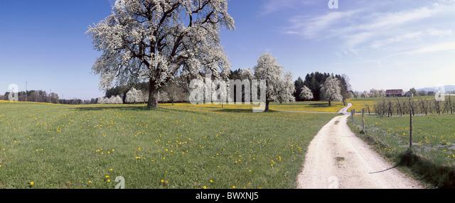 country lane spring blossoming fruit-trees dandelion meadow farmhouse panorama Switzerland Europe horizontal f - Stock Image