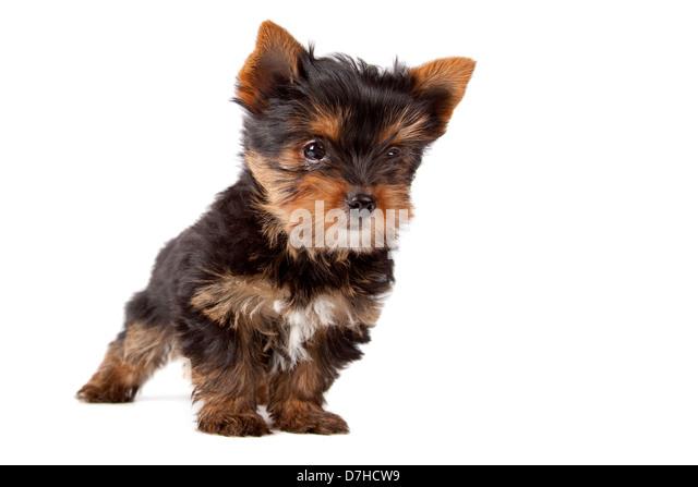 Dog Grooming Richmond North Yorkshire