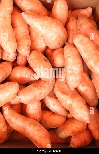 Florida Sumterville sweet potatoes grown Mississippi for sale at roadside produce stand along US - Stock Image