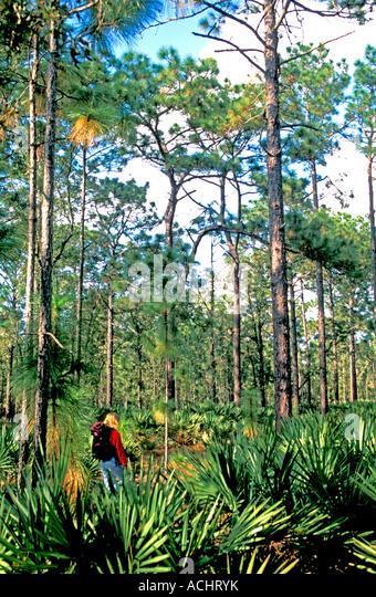 Woman backpacker hiking Florida Trail Ocala National Forest florida hiking national scenic trail - Stock Image