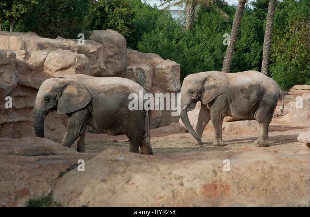 Spain zoo not barcelona not seville stock photos spain for Elephant barcellona