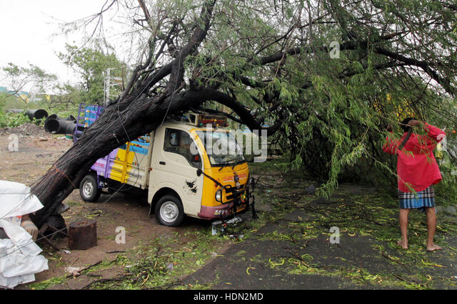(161213) -- CHENNAI, INDIA, Dec. 13, 2016 (Xinhua) -- A vehicle is hit by a tree blew down by strong wind when Cyclone - Stock-Bilder