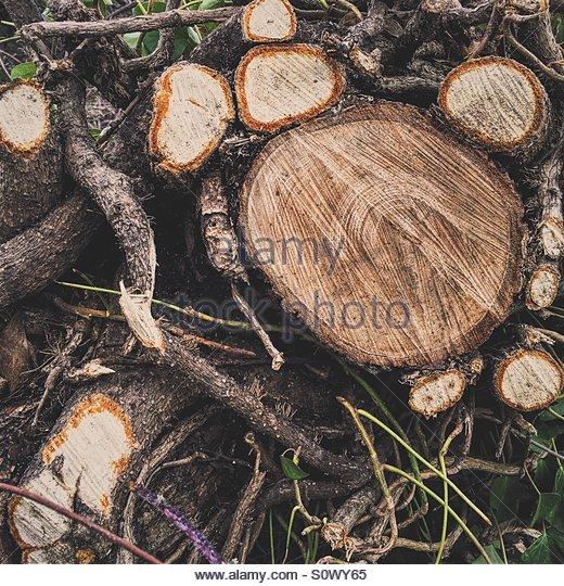 Felled Tree - Stock Image