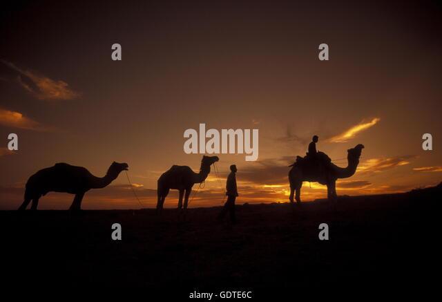 Ein Kamel Besitzer in der Tar Wueste bei Jaisalmer in der Provinz Rajasthan in West Indien in Indien. - Stock-Bilder