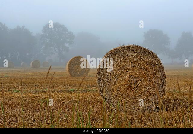 Hay bales in a field, East Frisia, Lower Saxony, Germany - Stock Image