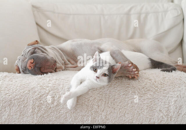 Cat and dog hugging on sofa - Stock Image