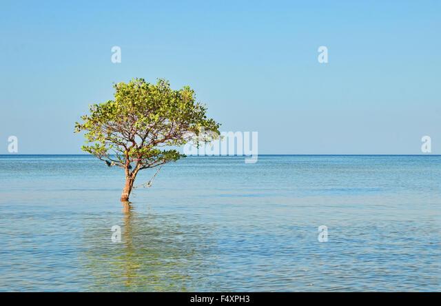Lone tree by the beach in Biduk-Biduk - Stock Image