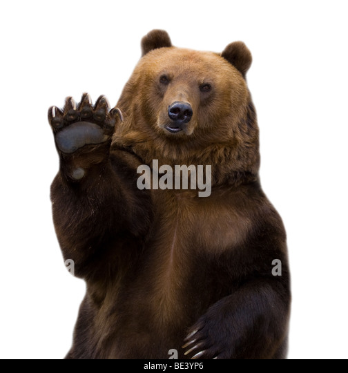 The brown bear welcomes, waves a paw. It is isolated on a white background. - Stock Image