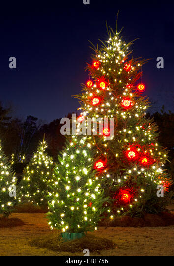 Christmas Tree White Lights Outside Stock s