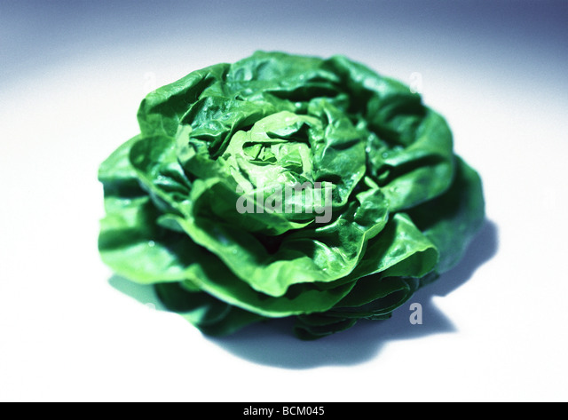 Head of lettuce - Stock Image