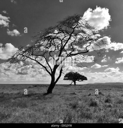 Two trees in savannah landscape, Africa - Stock Image