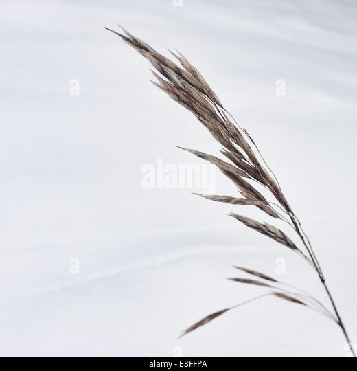 Close-up of wild grass - Stock-Bilder