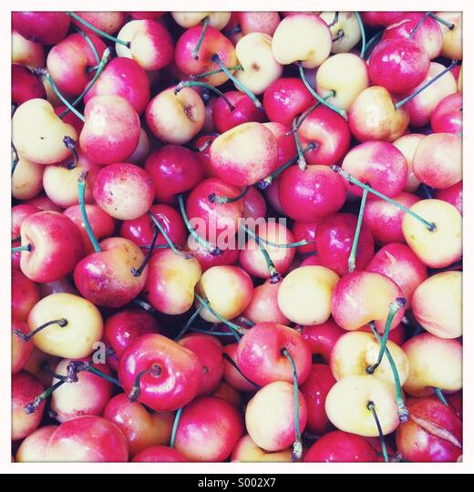 A close-up view of freshly picked red and white cherries with stems - Stock Image