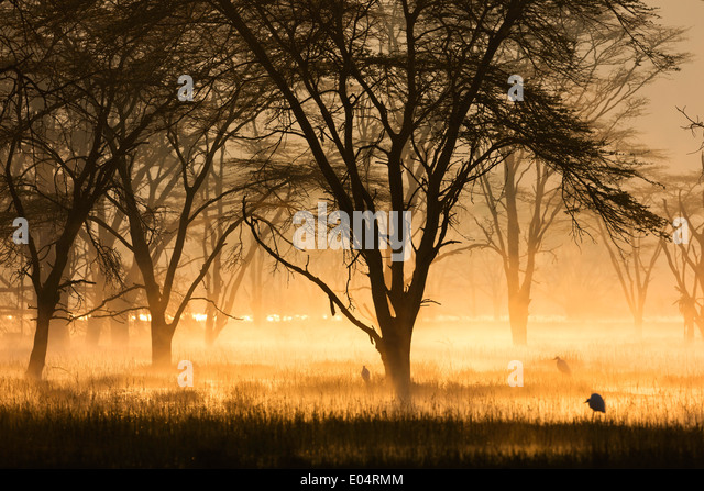 Sunrise on the banks of Lake Nakuru,Lake Nakuru National Park.Kenya - Stock Image