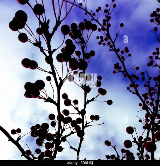 Ornamental cherry tree branches. - Stock-Bilder