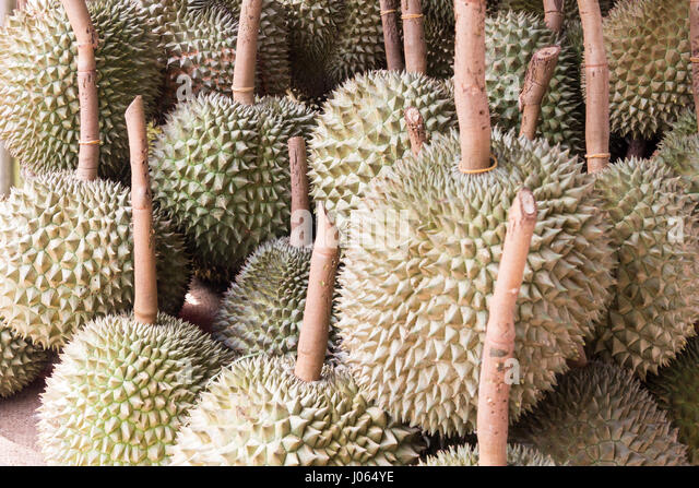 Durian Fruit Stock Photos Amp Durian Fruit Stock Images Alamy