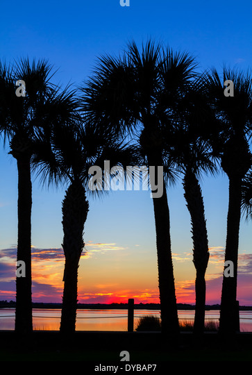 Palm Tree Sunset, Jekyll Island, Georgia - Stock Image