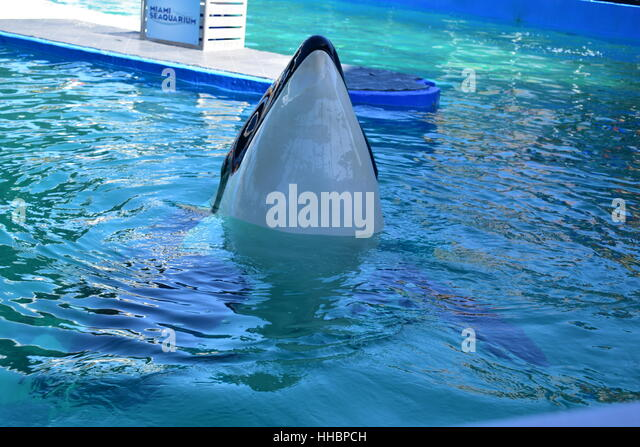 Whale Tongue Stock Photos & Whale Tongue Stock Images - Alamy