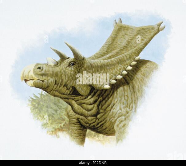 Palaeozoology - Cretaceous period - Dinosaurs - Chasmosaurus - Art work - Stock Image