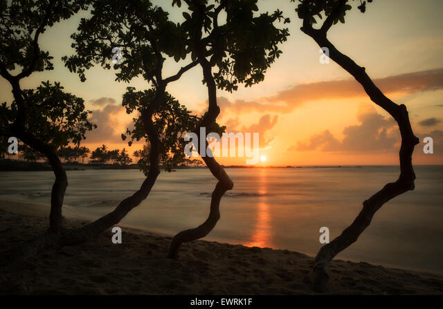 Sunset through trees on the Kohala Coast. Hawaii, The Big Island. - Stock Image