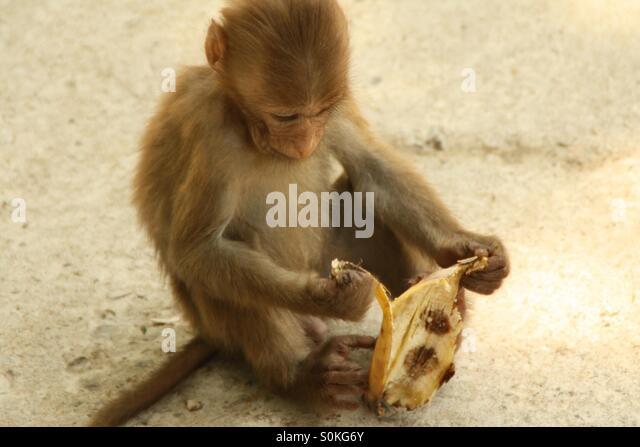 how to eat a banana monkey