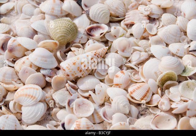 Various seashells, full frame - Stock Image