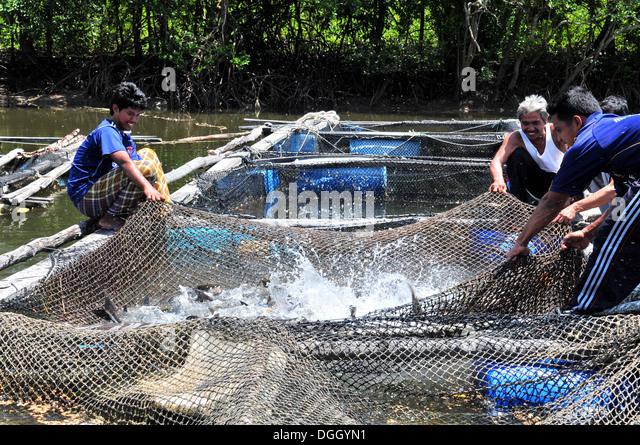 Aquaculture stock photos aquaculture stock images alamy for Fish farm 3